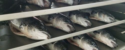 Snowland Salmon pic10