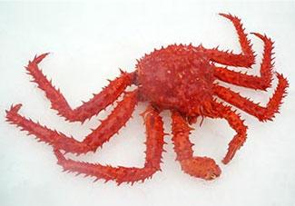 智利帝王蟹(南极)