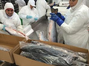 Salmon Processing43434
